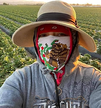 Mexican immigrant farmworkers are dying at highest rate of COVID-19 victims